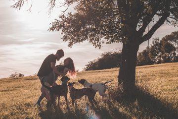 Portrét se psy - párové focení